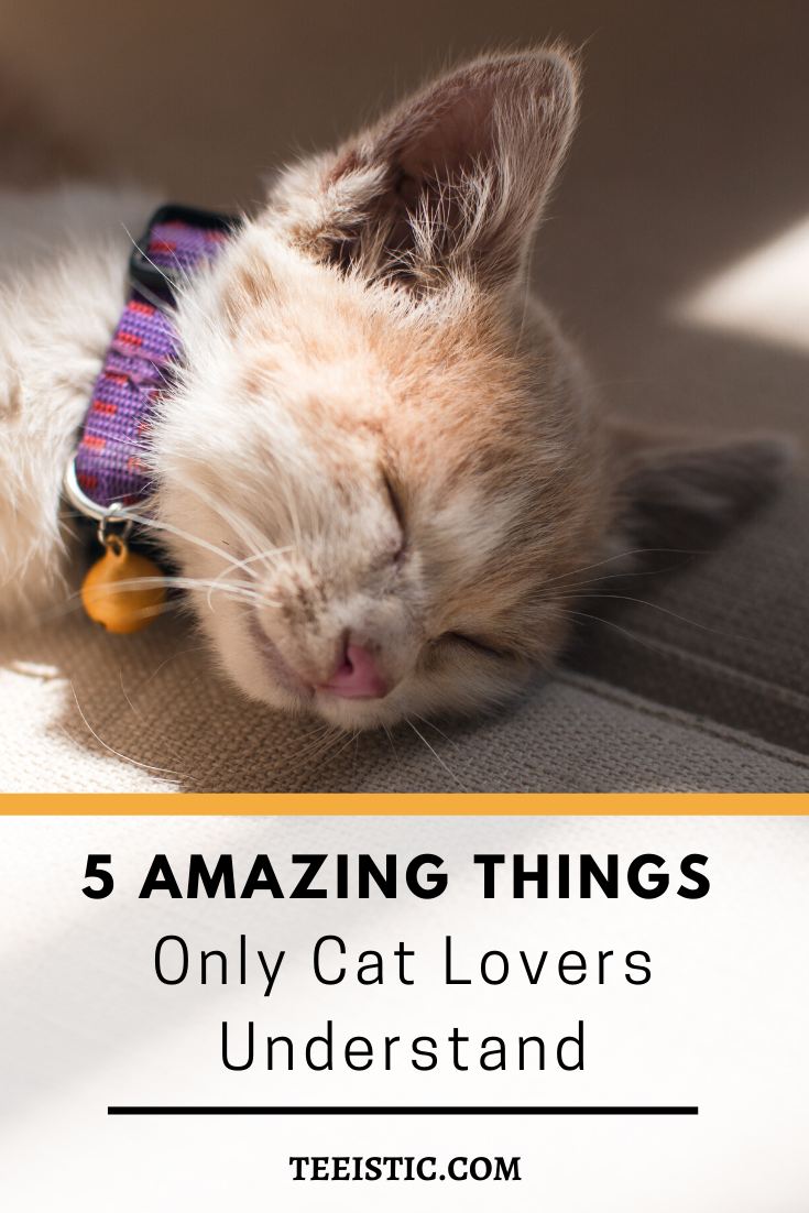 5 Amazing Things Only Cat Lovers Understand Cats Cat Lovers Cat Day