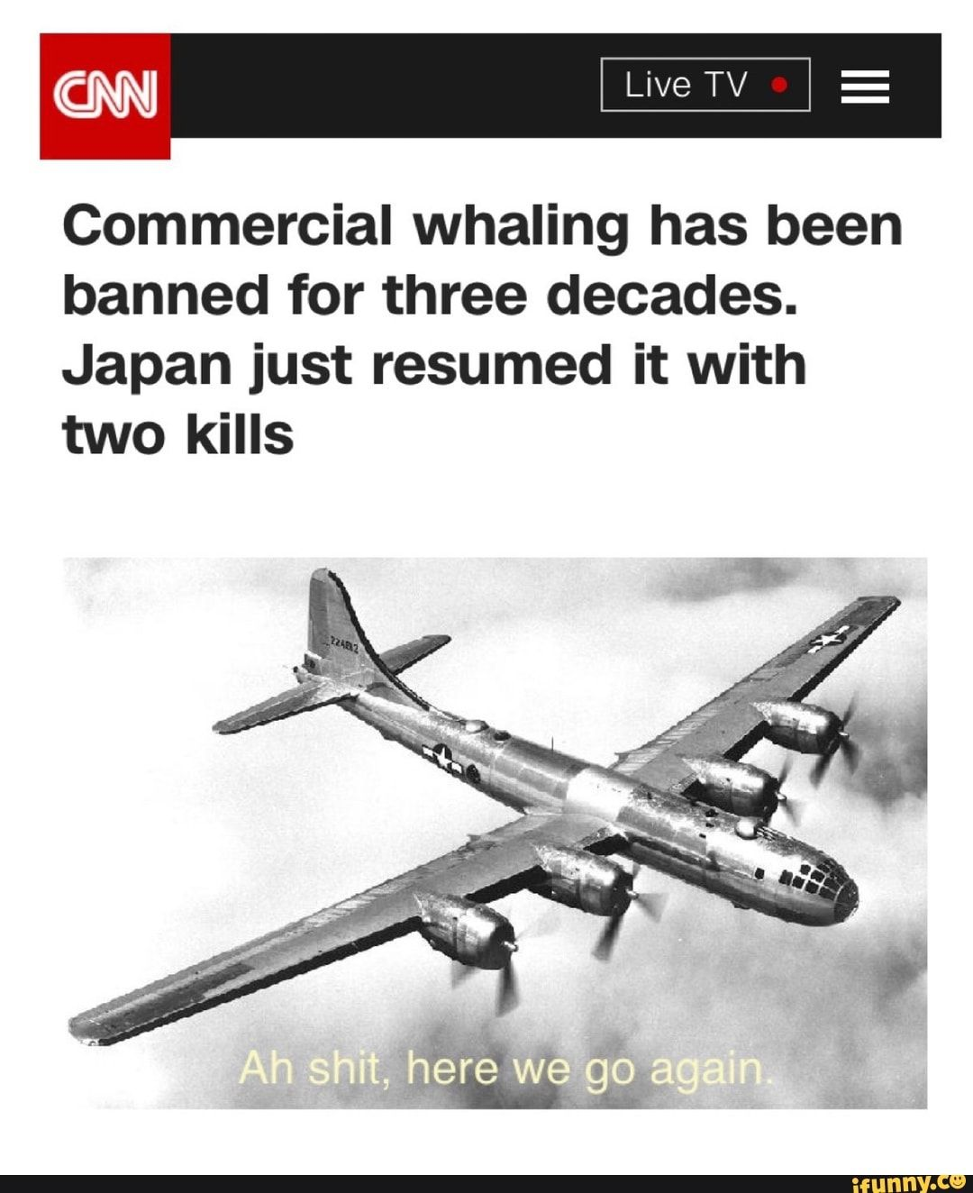 Commercial Whaling Has Been Banned For Three Decades Japan Just