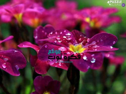 أجمل صور زهور طبيعية خلفيات ورود جميلة جدا جودة عالية Hd 7 Plants