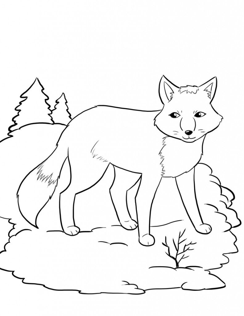 Fox Coloring Sheet : coloring, sheet, Printable, Coloring, Pages, Page,, Winter,, Animal
