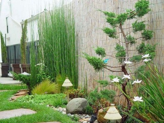 garden with bamboo and bonzai trees