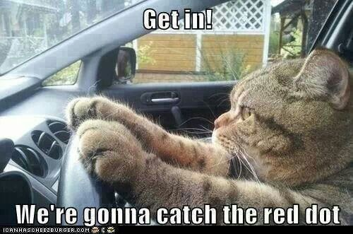 Driving Kitty