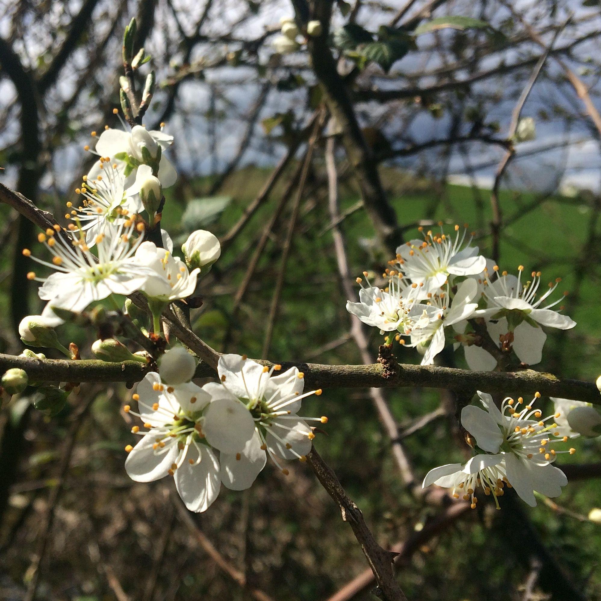 La primavera ya ha llegado a Agroturismo Arkaia #turismo #rural junto a #VitoriaGasteiz