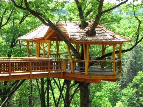 Charmant Plans For Tree House | Tree House Design Ideas , Pictures, Plans U0026 More!
