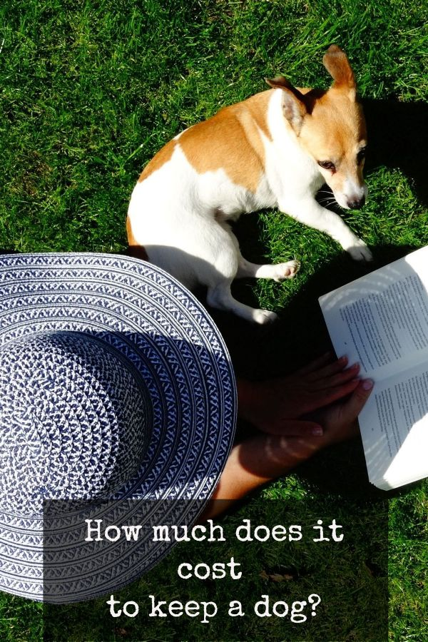 How much does it cost to keep a dog? Rescue dogs, Dog
