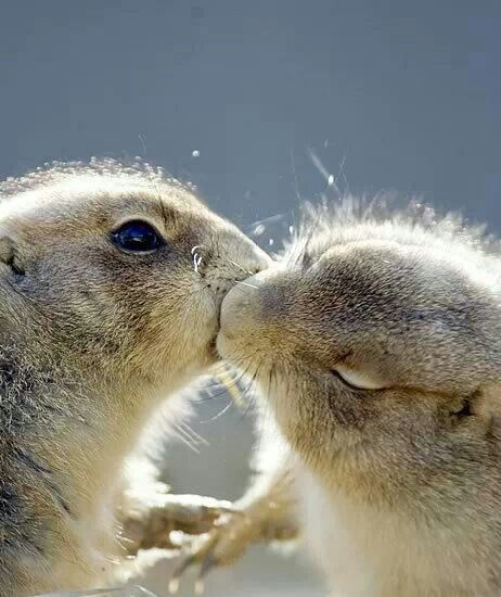 Even animals kiss and make up...lol