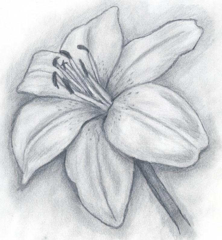 Картинки рисунок цветы карандашом