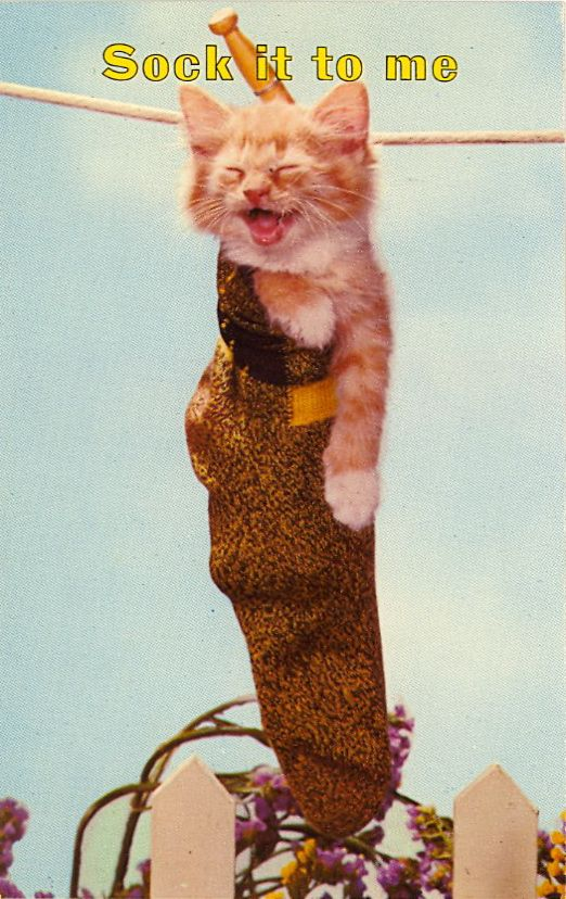 What's better (though more problematic) than a kitten in a boot? A kitten in a sock.