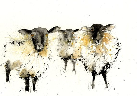 LIMITED edition print of my  SHEEP ref 2388 wall art home   Etsy