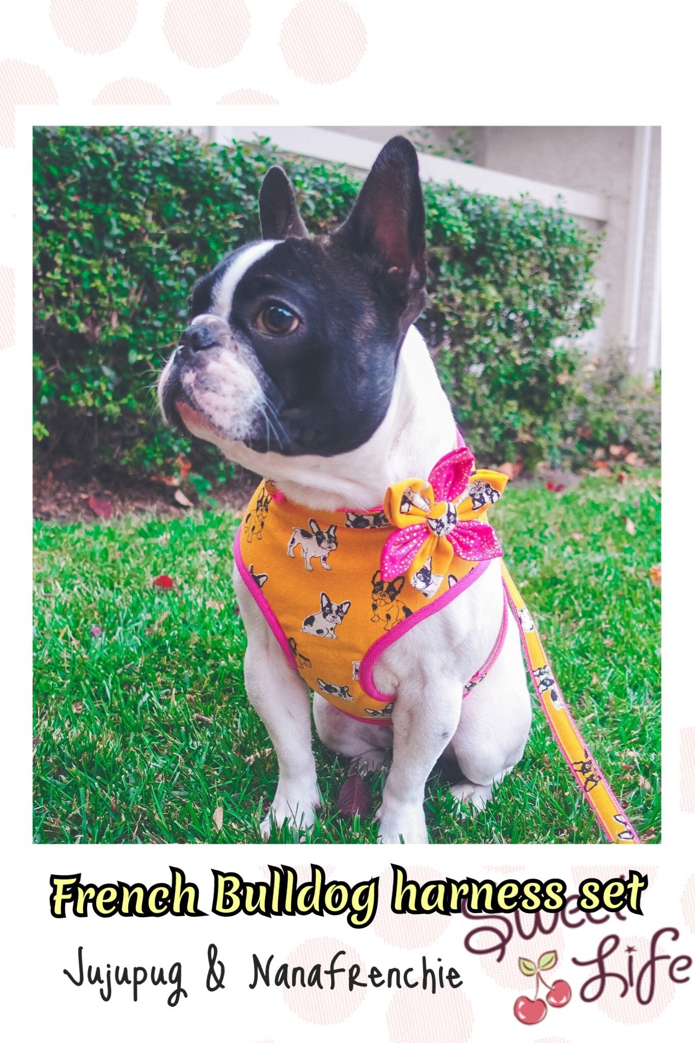 French Bulldog Girl Dog Harness Frenchie Boston Terrier Custom