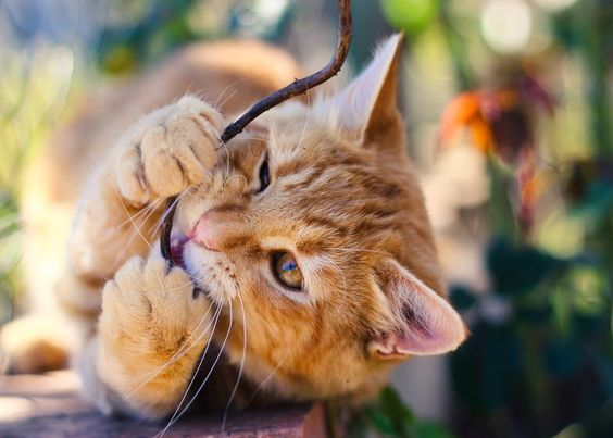 You may have noticed that your cat is starting to eat
