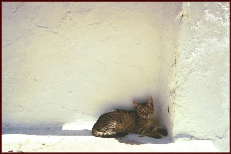 Staying out of the hot sun in Mykonos, Greece
