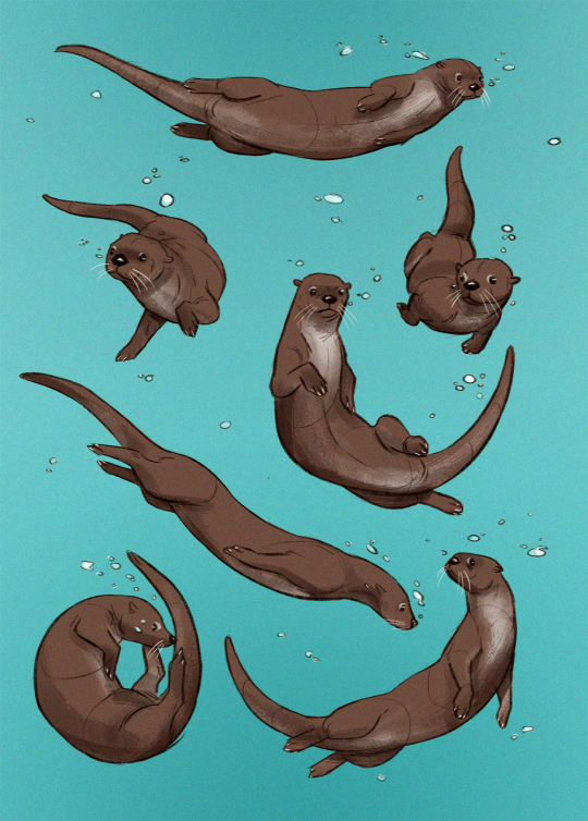 Otter Wallpaper In 2019 Animal Drawings Otters Animal