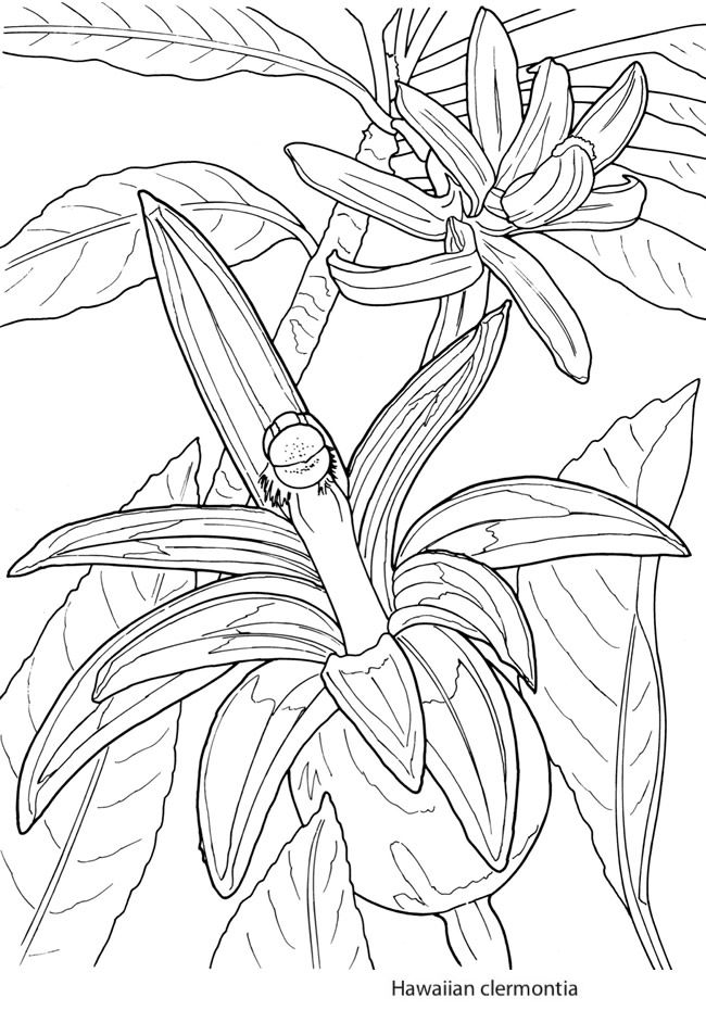 Creative Haven Tropical Blooms Coloring Book 6 Sample Pages