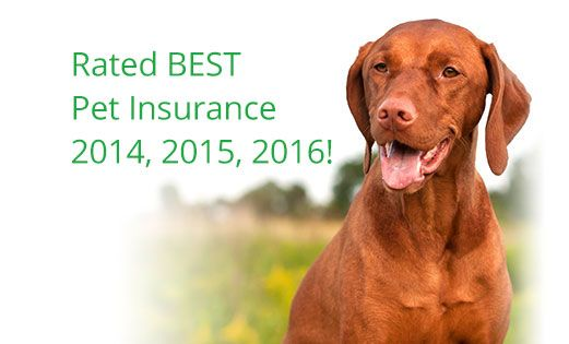 Healthy Paws Pet Insurance Rated Best In 2016 Puppy Insurance Dog Insurance Pet Insurance