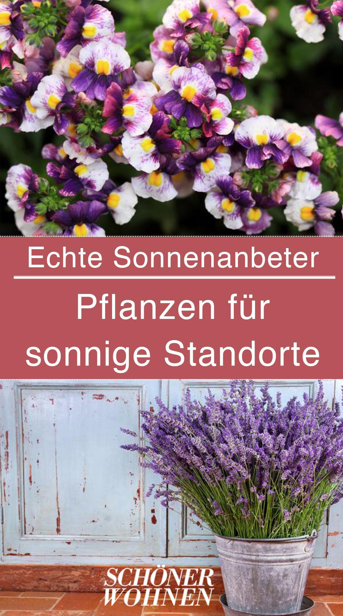 Balkonpflanzen Die S Sonnig Mogen Pflanzen Fur Sudbalkon