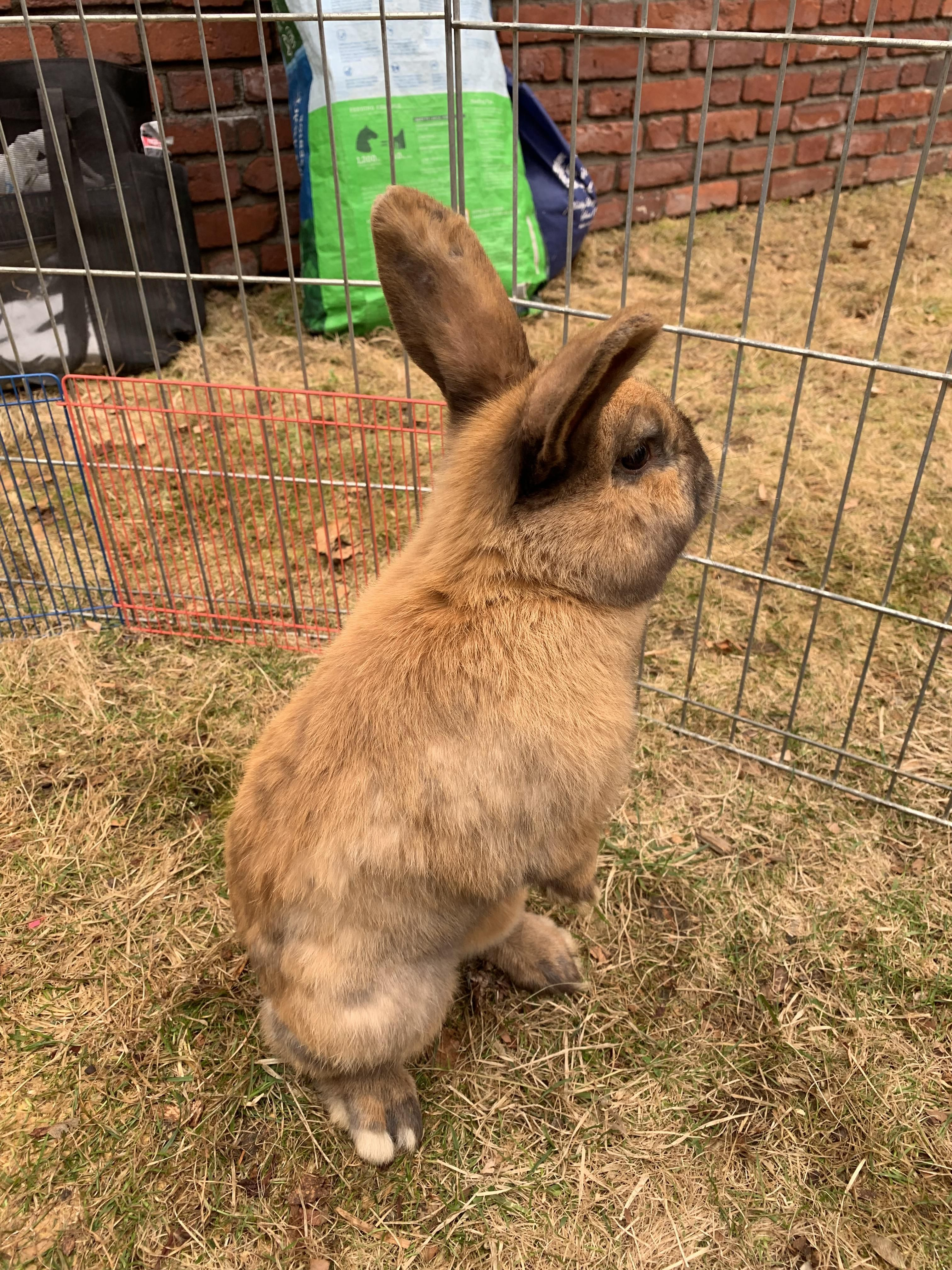 Are Rabbits Easy To Look After Low Maintenance Pets Animals For Kids Animal Companions