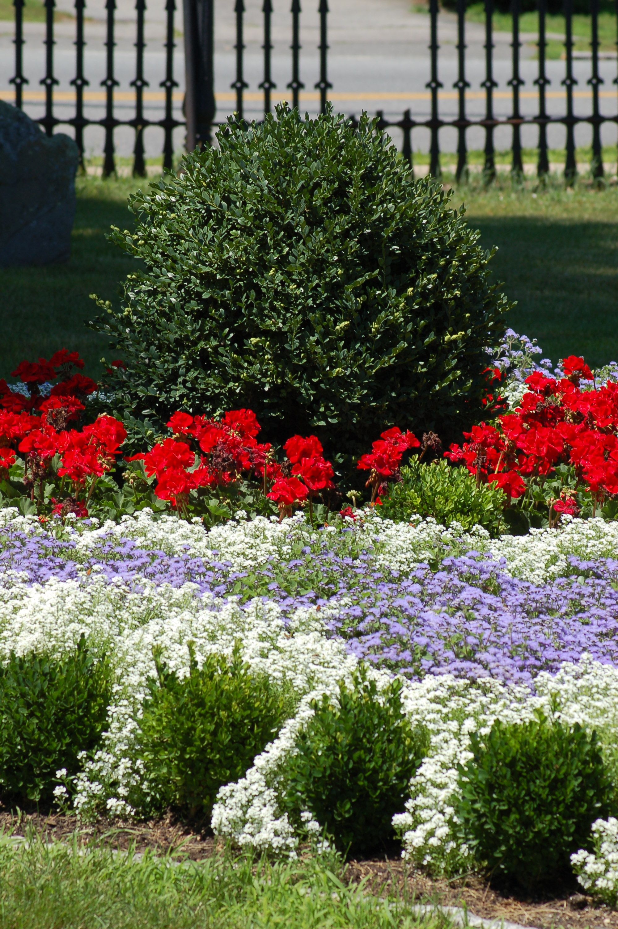 Best choices for red white and blue flowers red white blue with july 4 approaching some americans may be seeking ideas for red white and blue flower plantings this resource lists both common choices and more izmirmasajfo
