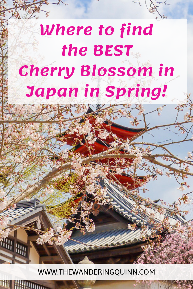 The Best Place To See Cherry Blossoms In Japan Cherry Blossom Japan Visit Japan Cherry Blossom Season