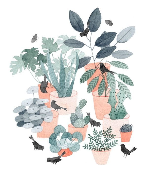 house plants drawing. house plants u0026 birds julianna swaney drawing