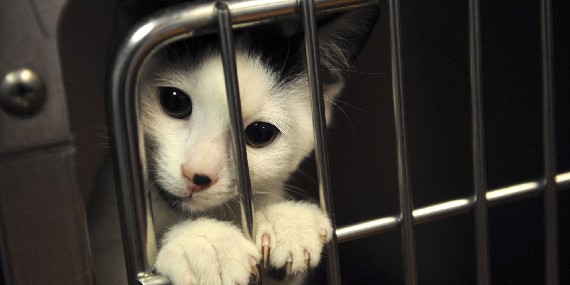 Find your local animal shelters in Seattle USA all in one