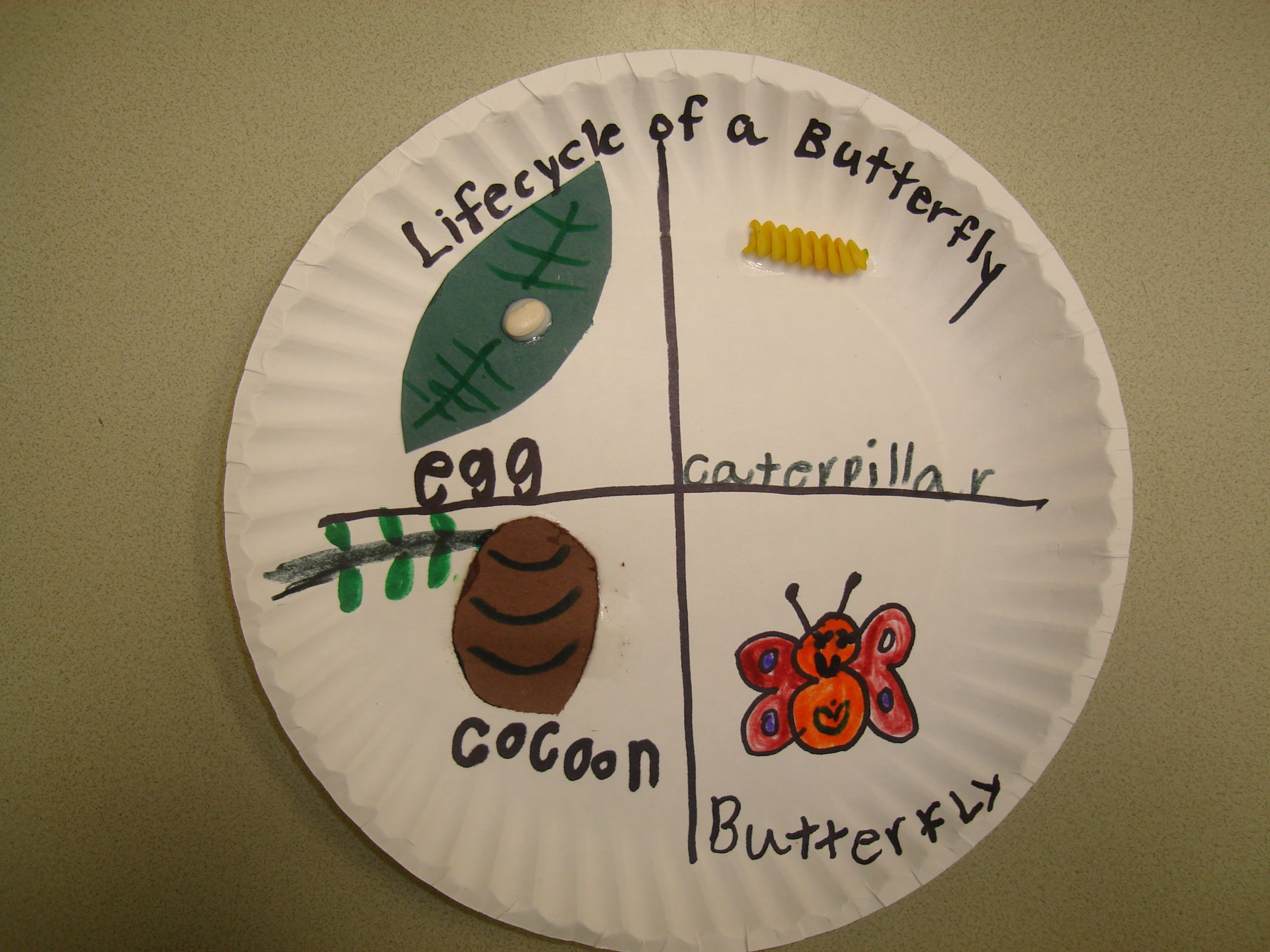 Free coloring pages of butterfly life cycle - Caterpillar Activity Plate Leaf Lifecycle Of A Butterfly