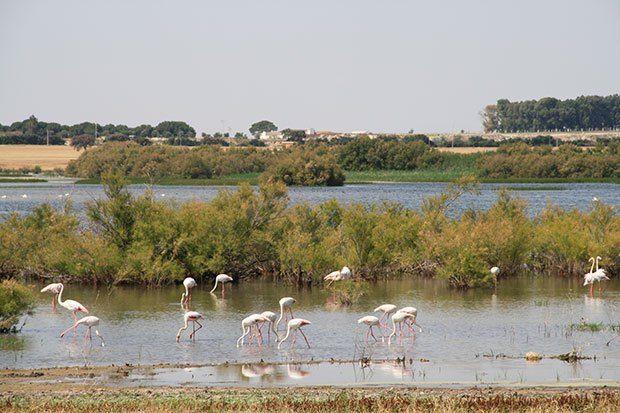 Recuperación medioambiental de la laguna de Los Tollos   SoyRural.es