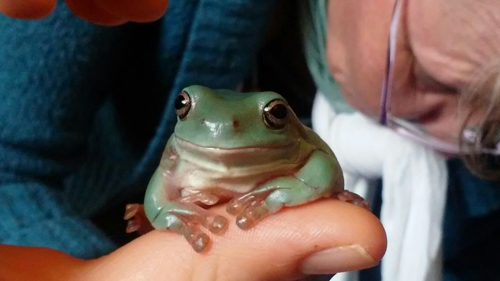 This Is This Is A Whites Dumpy Tree Frog Frogs Pinterest - Frog wearing two snails as hat becomes star of hilarious photoshop battle