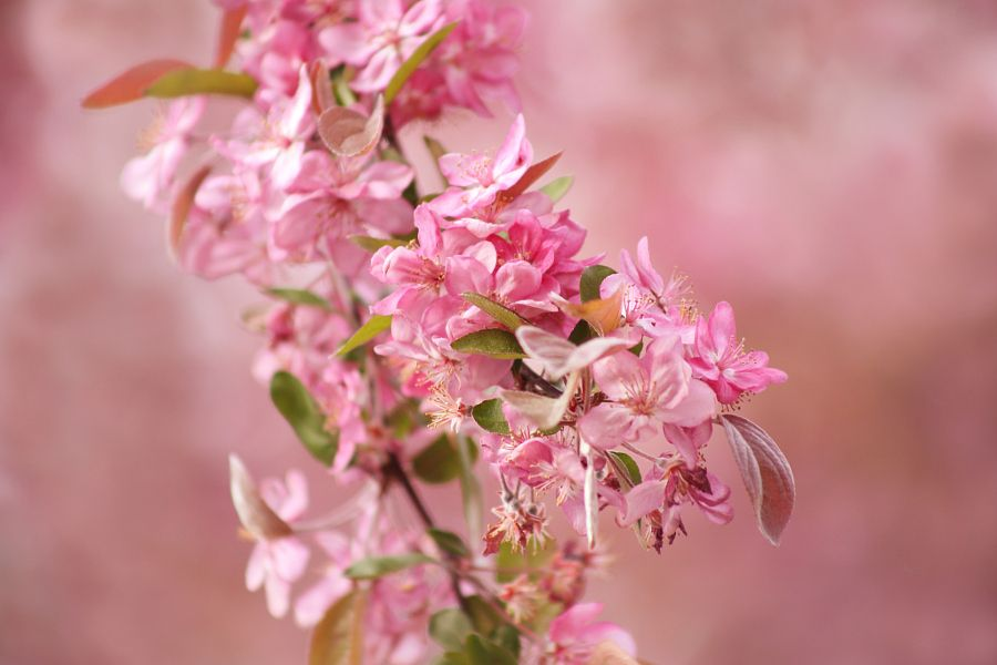 Spring in Pink ;-) !!! by Jay Sabapathy - Photo 155081831 - 500px