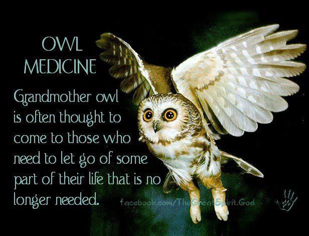 Owl Medicine 3jo3 Shamanism Shamanismi Pinterest