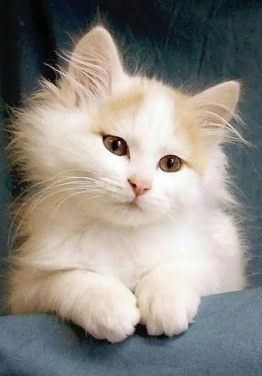 Cute Orange And White Kitten Pretty Cats Kittens Cutest