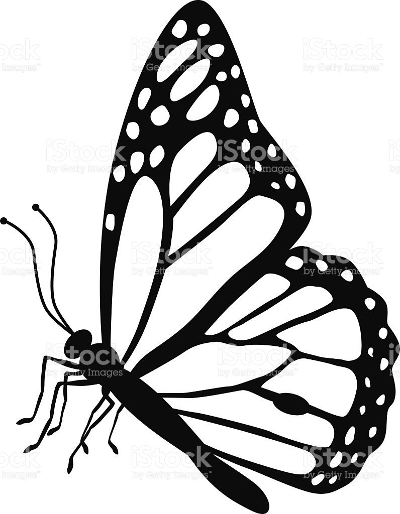 A vector illustration of a monarch butterfly side view in