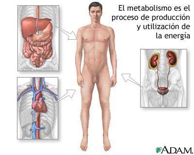 El ritmo metabólico El ritmo metabólico es el que trata de la velocidad a la que funciona el metabolismo. Varía según las personas, los días e incluso las horas. En parte lo regula el sistema nervioso y en parte, las hormonas. El ritmo metabólico se estima midiendo la cantidad de oxigeno consumido, pues el metabolismo genera unas 4,82 Kcal de energía por cada litro de oxígeno que consumes.