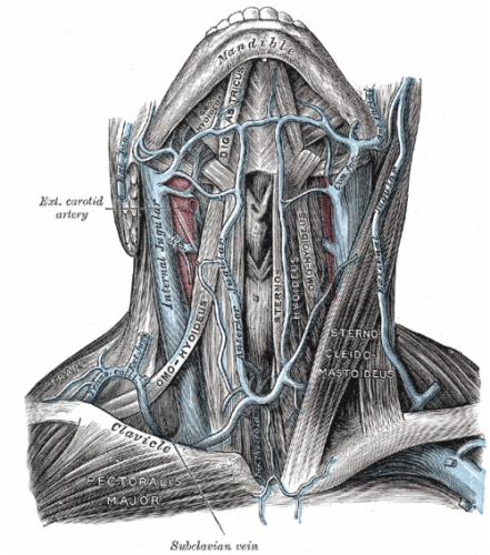 grey's anatomy book heart - Google Search   Human anatomy ...