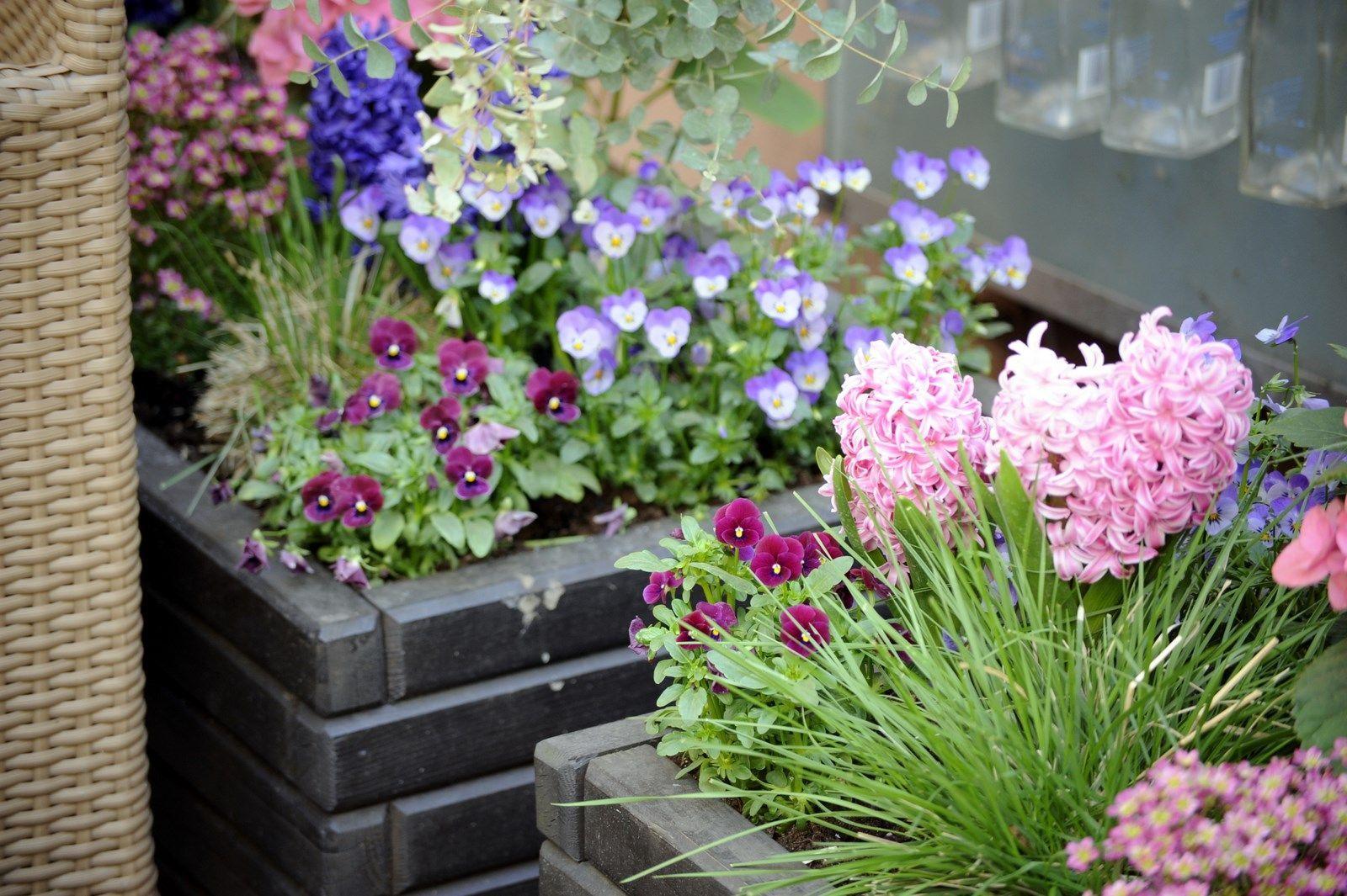 Kwiaty W Donicach W Ogrodzie Szukaj W Google Balkon Taras