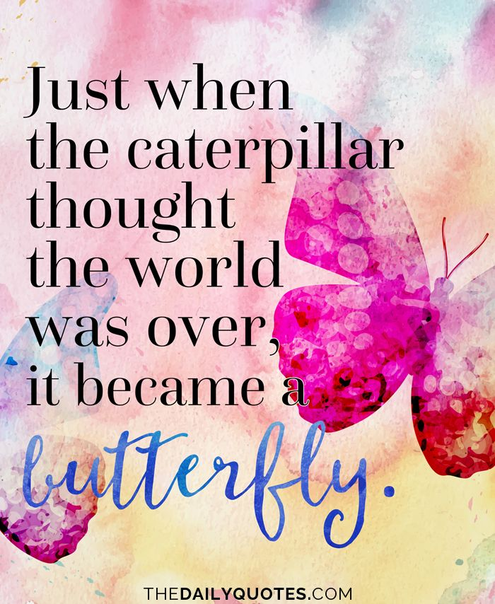 Just when the caterpillar thought the world was over, it became a ...
