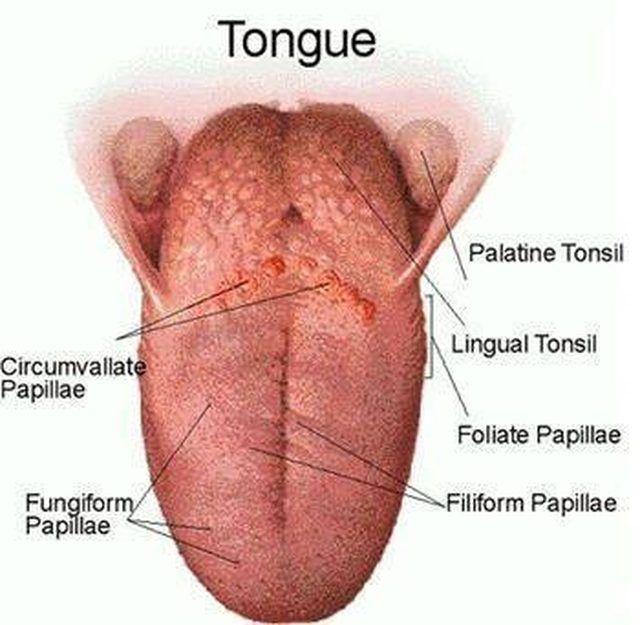 irritated tongue papillae treatment giardia intestinala