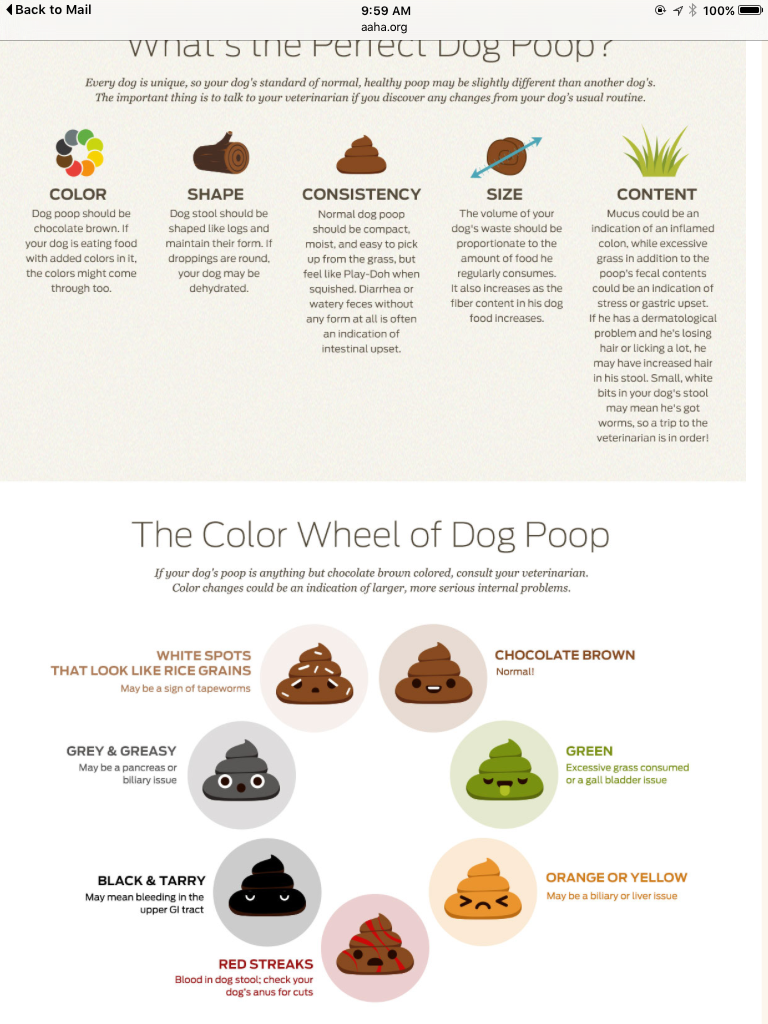 Dog Poop Colors Amp What It Means M I S S Y P O O Dogs