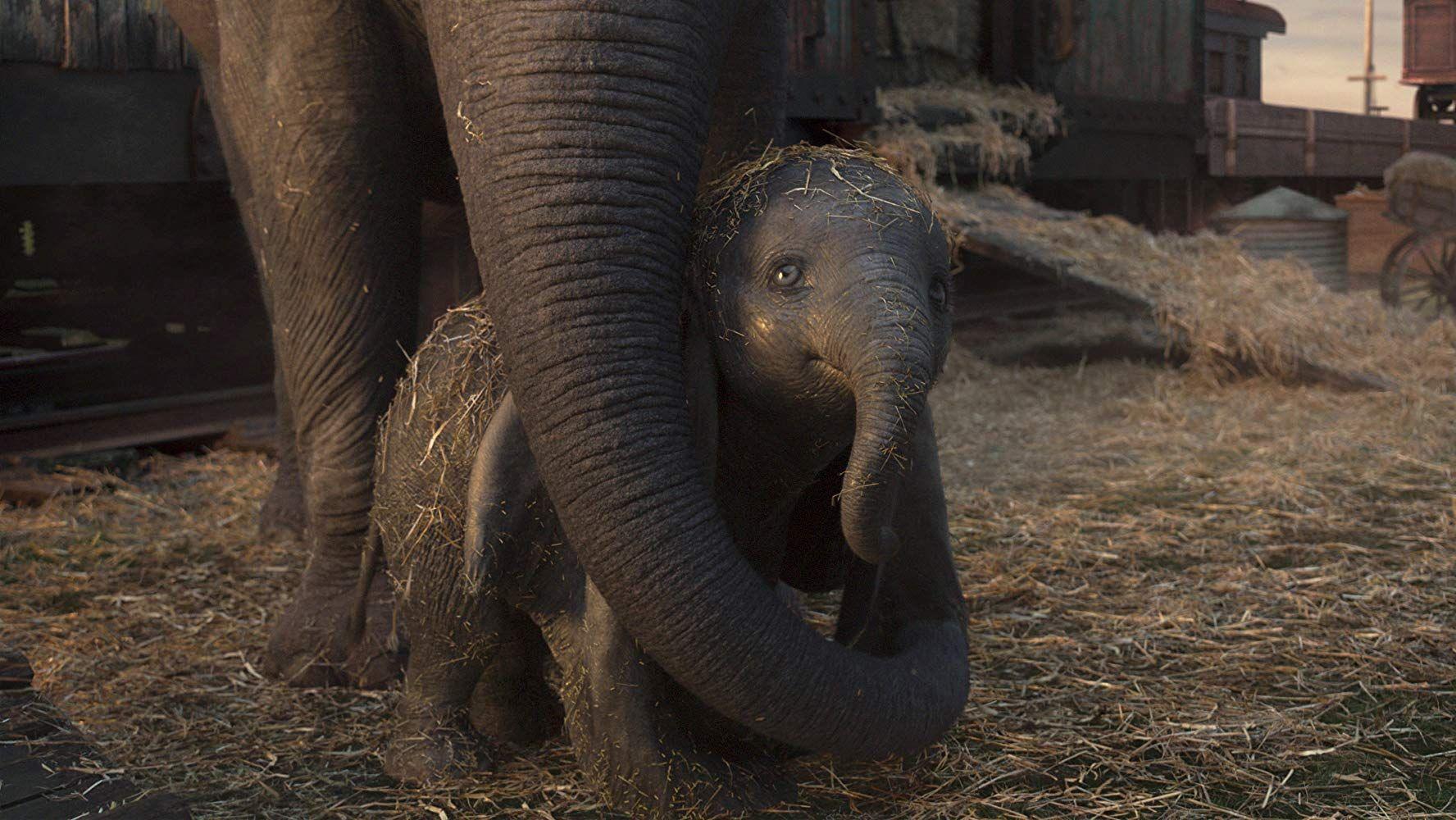 Dumbo (2019) - Photo Gallery - IMDb | In 2019: Films I've
