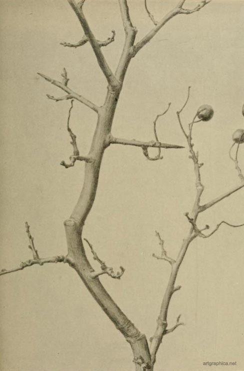 Artgraphica The Artistic Anatomy Of Trees Art Pinterest