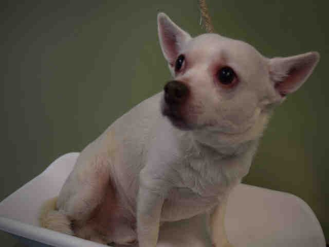 TO BE DESTROYED 04/11/17 MARCO A1108172 OWNER HOSP Marco