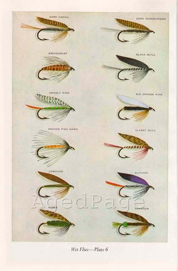 Vintage print trout fishing flies art illustration by for Types of fishing lures