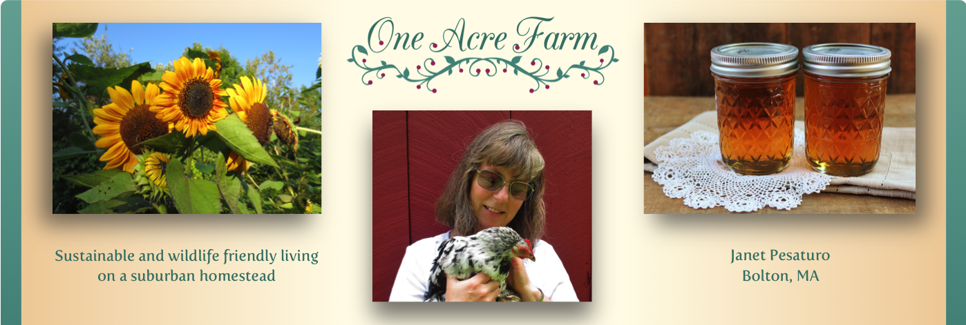 4 Benefits of a Mixed Flock of Backyard Chickens - (With ...