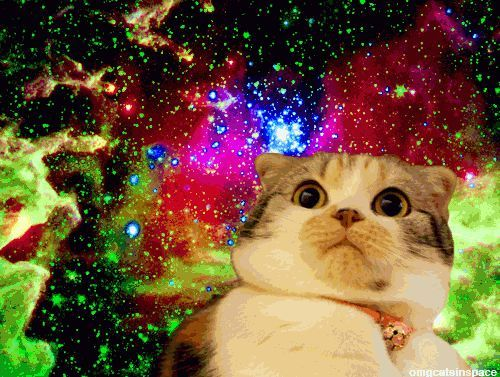 Cats Universe Meme Google Search
