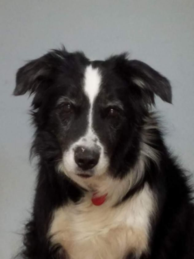 Adopt Winston on Dogs up for adoption, Dogs, Border collie