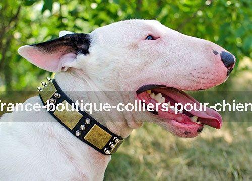 collier pour chien bull terrier