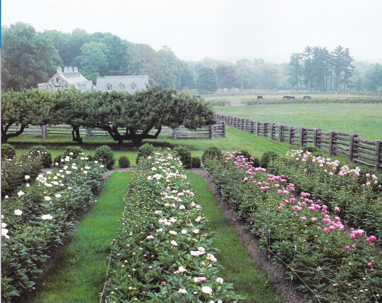 Martha Stewart's peony garden is creative inspiration for ...