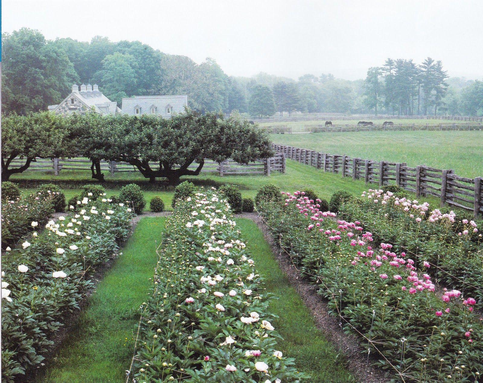 Martha Stewart's peony garden is creative inspiration for