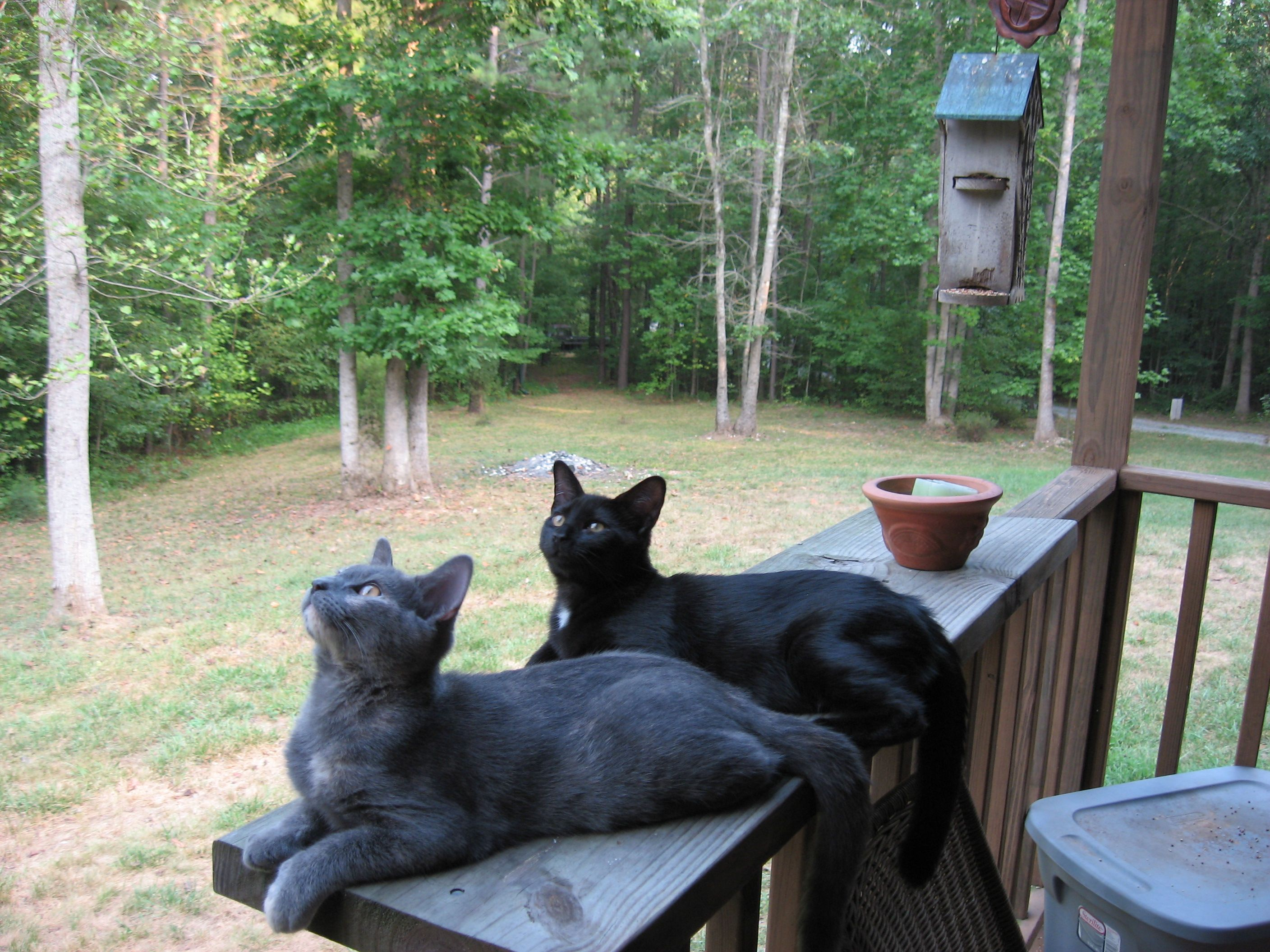 Shhh....if they think you are yard art, the hummingbirds fly slower...and closer... Smokey and Dot lounging on the front porch