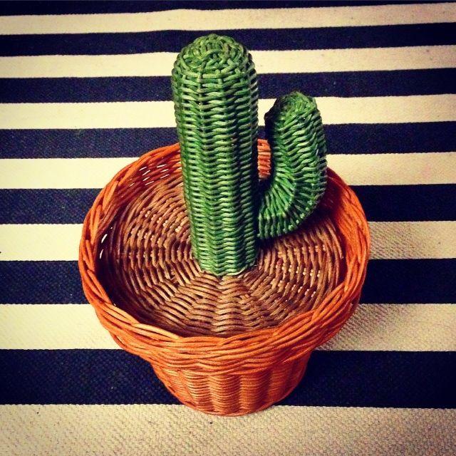 The Basket Case Cactus - kraken & co. emporium